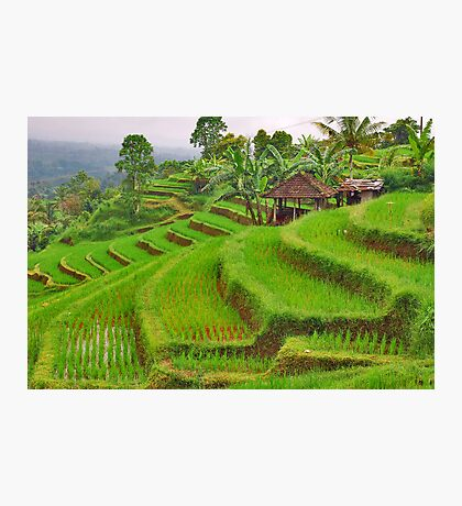 Green rice terraces Photographic Print