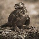 Land Iguana by becks78