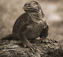 Land Iguana by becks78