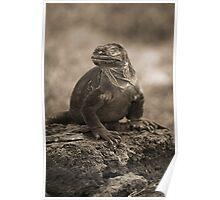 Land Iguana Poster
