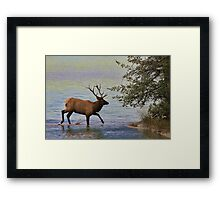 Magnificent Stag in Jasper National Park Framed Print