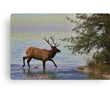 Magnificent Stag in Jasper National Park Canvas Print