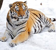 Basking in the Snow by Jeff Palm Photography