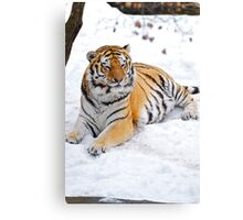 Basking in the Snow Canvas Print
