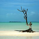 Dead wood in Harbor Island by aaxford
