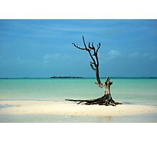 Dead wood in Harbor Island Photographic Print