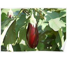 PICK OF THE CROP - EGG FRUIT Poster