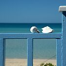 Sea shells and the Caribbean by aaxford