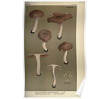 Illustrations of British Fungi by Mordecai Cubitt Cook 1891 V8 0273 AGRICUS  INOCYBE  VIOLACEO FUSCUS Poster
