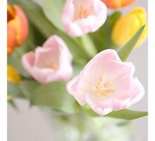 Tulips bouquet Photographic Print