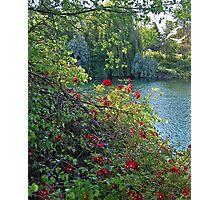 Park Paradise Photographic Print