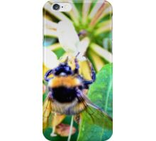 Honey suckling iPhone Case/Skin