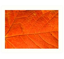 Orange Maple Leaf, Background Art Print