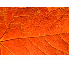 Orange Maple Leaf, Background Photographic Print