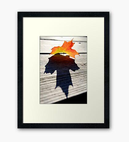 Maple Leaf Framed Print