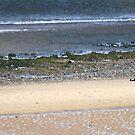 Black Dog on a beach by Mark Smith
