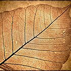 Skeleton Leaf by Steve Appleton
