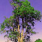 WV tree by Sandra Hopko