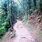 calm path by bishan