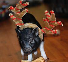 Pot Bellied Pig by Beatriz  Cruz
