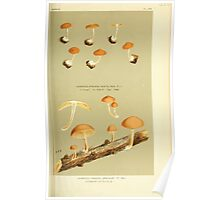 Illustrations of British Fungi by Mordecai Cubitt Cook 1891 V3 0459 AGARICUS  PHOLIOTA  UNICOLOR Poster