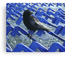 firm purchase (raven upon shopping trolleys) Canvas Print
