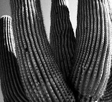 Giant of the desert by LyssaMadness