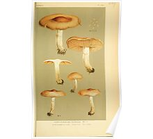 Illustrations of British Fungi by Mordecai Cubitt Cook 1891 V3 0637 AGARICUS  HEBELOMA  TESTACEUS Poster