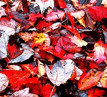 West Virginia Fall  by erinmccoy