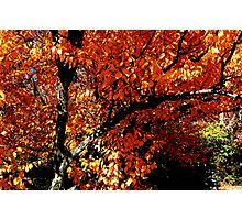 West Virginia Fall 5 Photographic Print