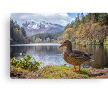 Scotland - Glencoe Wildlife Canvas Print