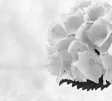 white flower by Maria Moreno