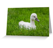 Baby Swan Greeting Card