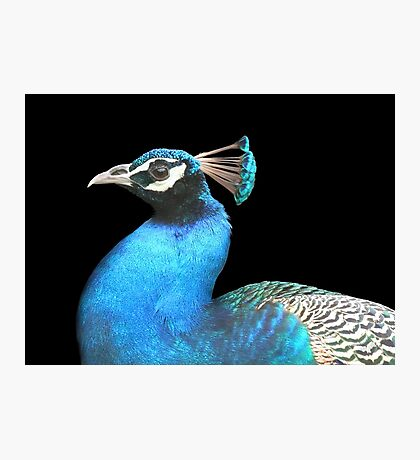 INDIAN PEACOCK  Photographic Print