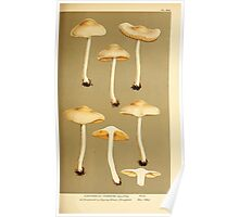 Illustrations of British Fungi by Mordecai Cubitt Cook 1891 V6 0161 CORTINARIUS  HYDROCYBE  DILUTUS Poster