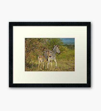 Mom and Baby Zebra Framed Print