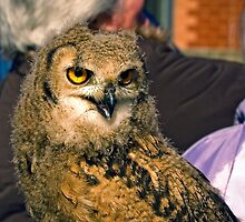 Owl on show by sandmartin
