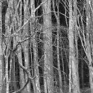 Dark Woods - Snowdonia Wales by Mark Smith