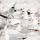 Gulls by melissajmurphy