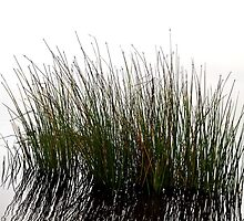 Grass Slash by Andrew Simoni