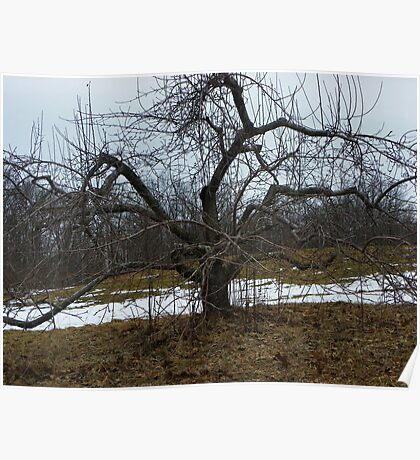 A Naked Apple Tree Poster