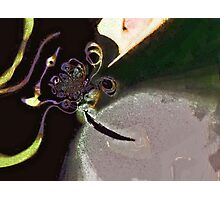the flying purple people eater Photographic Print