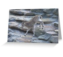 Baby Mountain Goat Greeting Card