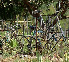 Giants Cycle by Arthur Koole