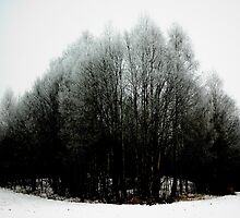 frosty woods by nwd. funke