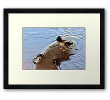 Daily routine Framed Print