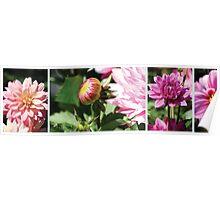 Queenstown Flowers Poster