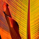 Banana Tree Foliage by Tracy Riddell