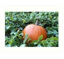 Pumpkin Time 4 Art Print