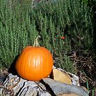 Pumpkin Time 5 by WalnutHill